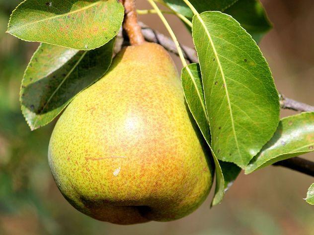 Ученые назвали идеальный фрукт для похудения
