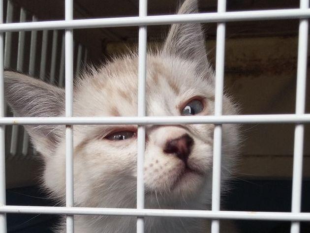 Сообщения озамурованных живьем кошках вподвалах домов ЮВАО неподтвердились
