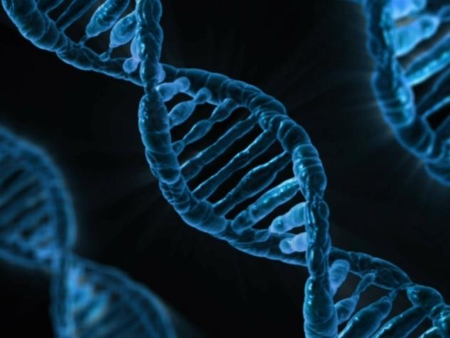 У актуальных насегодняшний день граждан России только 16% генов откоренных русских,— ученые