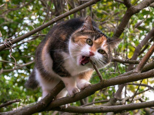 ВИталии соседки судятся из-за кота, ведшего двойную жизнь
