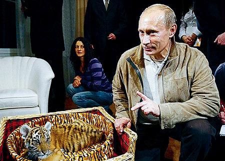 Два года назад российский премьер-министр получил тигрёнка в подарок на день рождения. Этот презент Владимир Владимирович назвал самым необычным за все годы