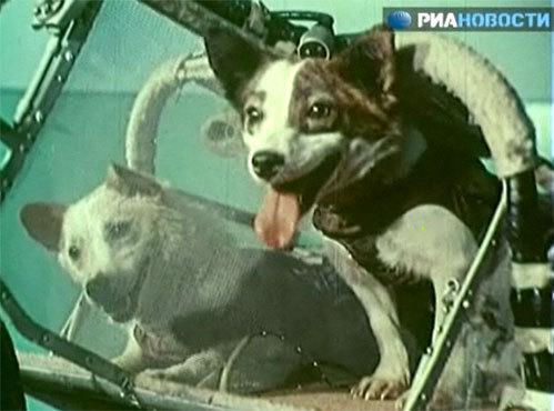 Белка и Стрелка (Кадр из видео РИА «Новости»)