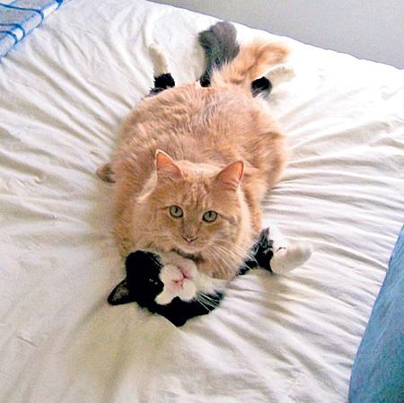 «Рабочий инструмент» кота оснащён на конце маленькими шипами - похоже, кошкам это нравится
