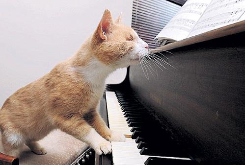 Ноты слепому коту, в сущности, не нужны. Стиви звуками общается с окружающим миром