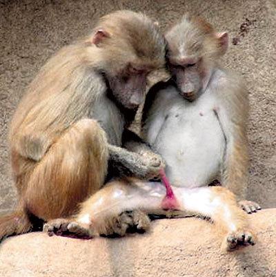 Далеко не все ученые поняли, что ЭНГЕЛЬС, говоря, мол, обезьяна стала человеком, взяв в руку палку, выражался образно