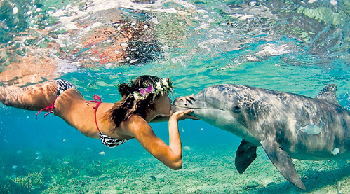 Пенис у дельфина длина
