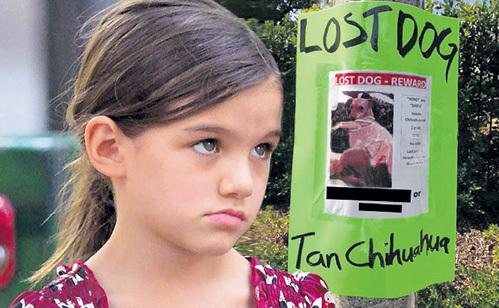 Сури с мамой обещают нашедшему чихуахуа $1 тыс.