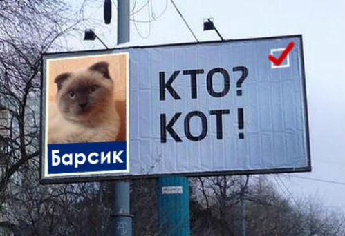 (Фото: vk.com/altaionline)