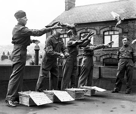 Во время Второй мировой голуби не только доставляли секретные шифровки, но и подрывали вражеские объекты (на фото британские ополченцы тренируют птиц)