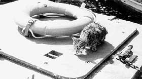 ПОСЛЕ ЗАПЛЫВА ОТМЕННЫЙ АППЕТИТ: Василий &#034разминается&#034 ворованной рыбкой