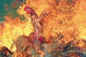 БЕЗЖАЛОСТНЫЕ ТАЙЦЫ: экономя время, сжигают птичек живьем