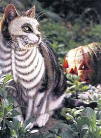 РАСКРАСКА ПОД СКЕЛЕТ: идеальный костюм для Хэллоуина