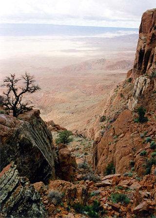 На скалах найдены многочисленные отпечатки динозавров