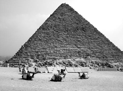 «Корабли пустыни» на фоне пирамиды. pixabay.com