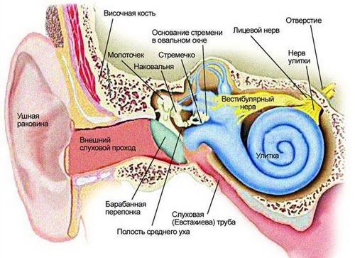 Строение уха человека. Фото: med-pomosh.com