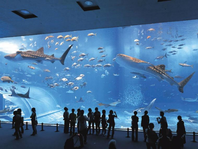 В столицеРФ убили совладельца океанариума в«Крокус-Сити»