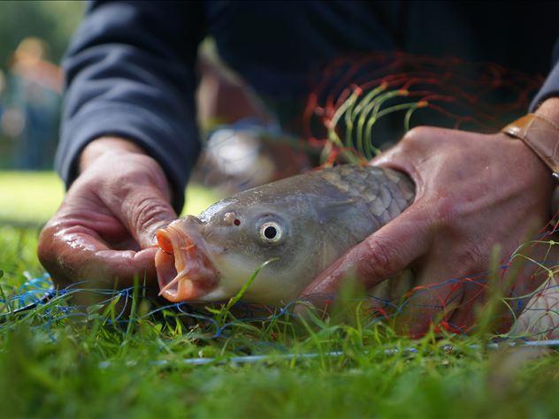 Рыба может резко подорожать