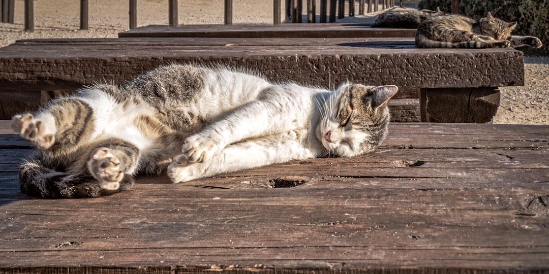 Кто истребляет московских кошек? Фото: pixabay.com