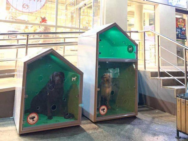 У столичной «Пятерочки» установили будки для собак